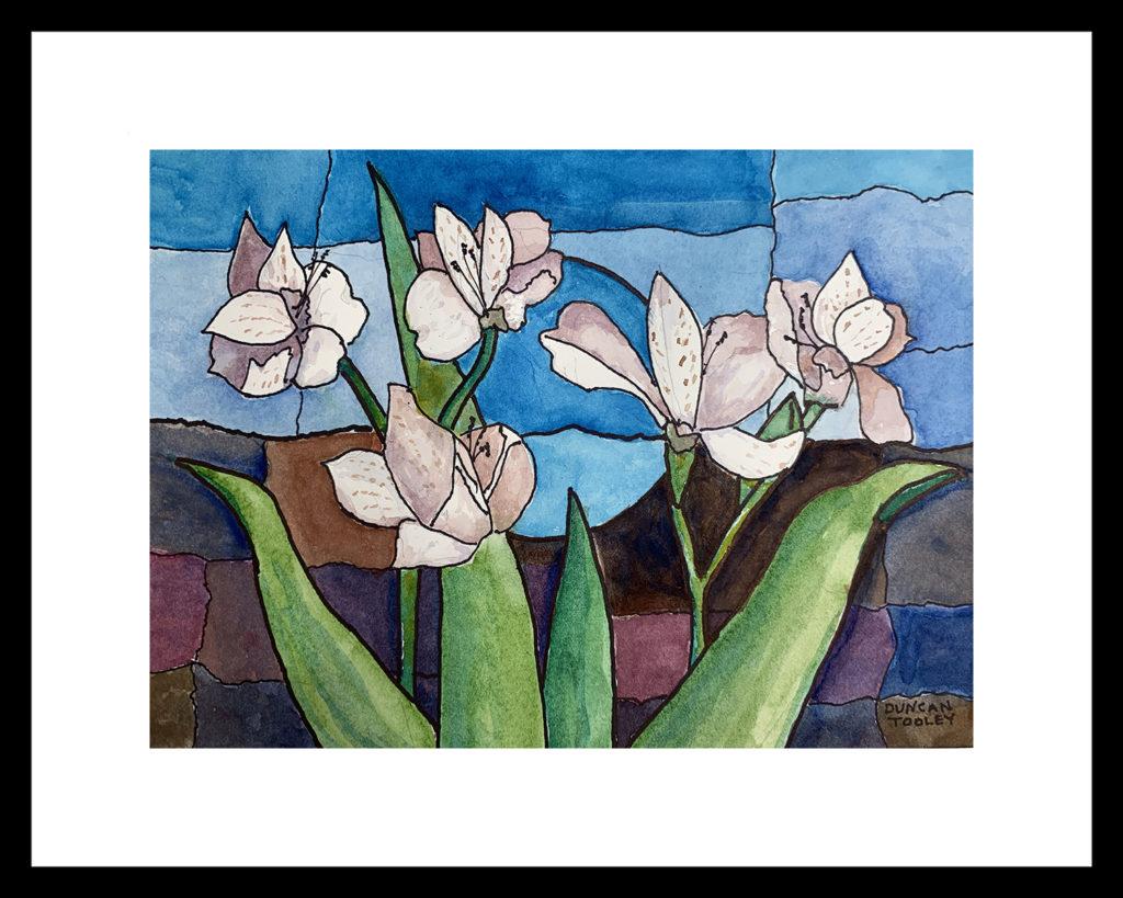 Alstroemeria Joy by Duncan Tooley